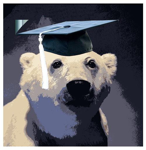 the smartest bear